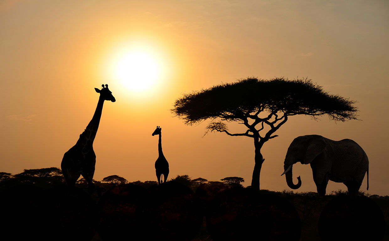 Giraffe-Elephant-Sunset
